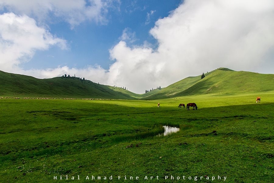 The beautiful lush green meadows of Tosa Maidan