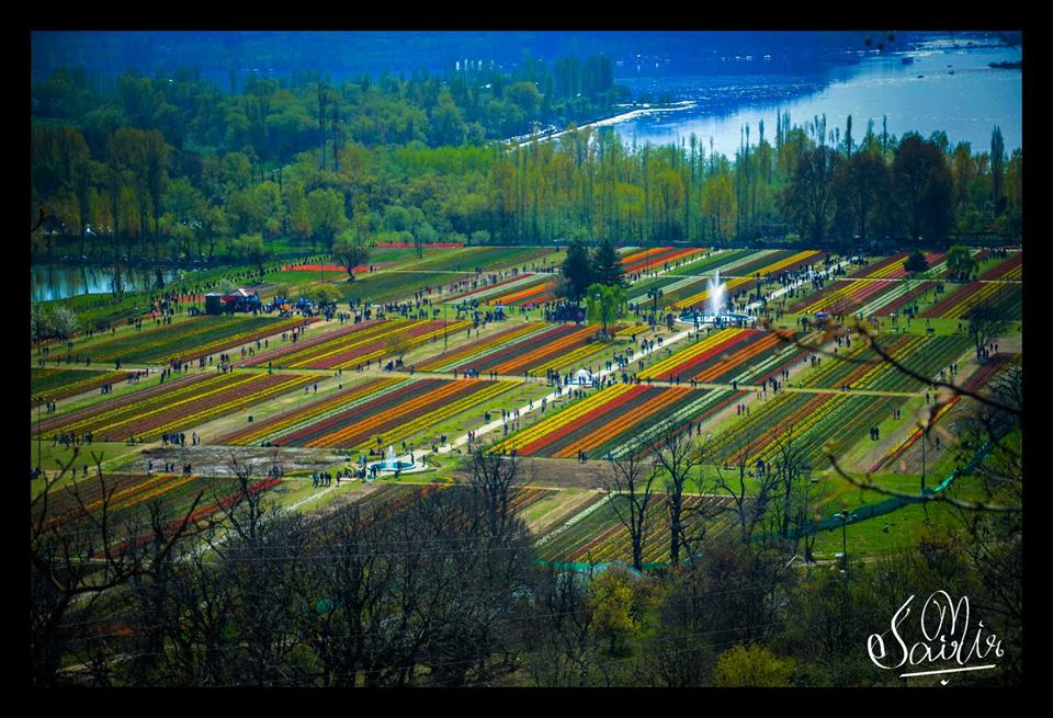 tulip garden dal lake terrace