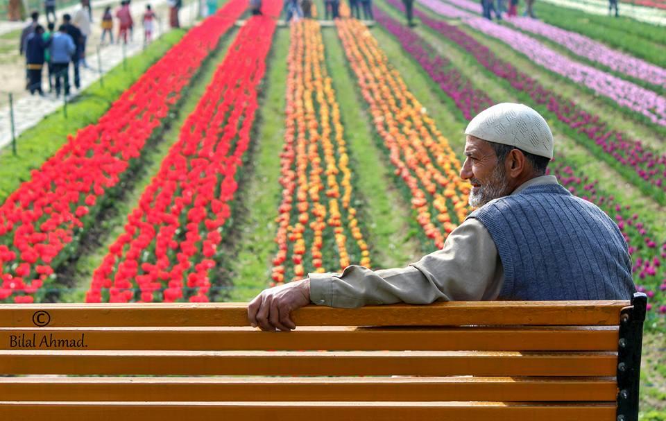 bilal kashmiri old man tulip garden